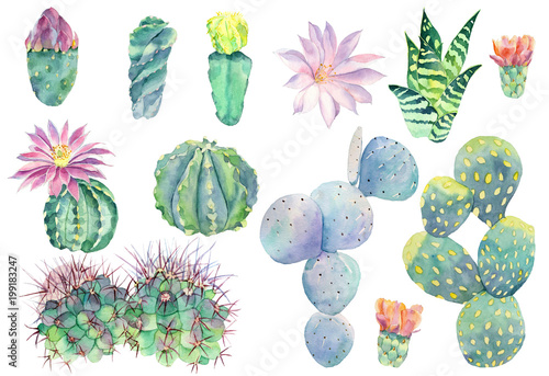 Cadres-photo bureau Aquarelle la Nature Set of watercolor cactus