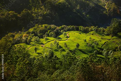 Keuken foto achterwand Zwart beautiful Tea plantation sunset landscape with winding road