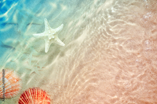 Poster Mer / Ocean starfish and seashell on the summer beach in sea water.