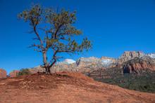 Lone, Twisted Pine Tree And Red Rock Mountains, Sedona, AZ.