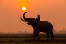 Silhouette Elephant In The Sun...