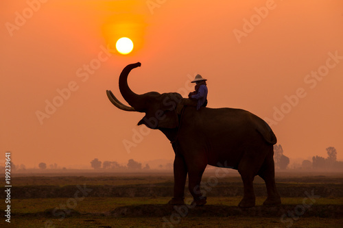 Silhouette elephant in the sunset.