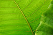 Close up of green leaves for background