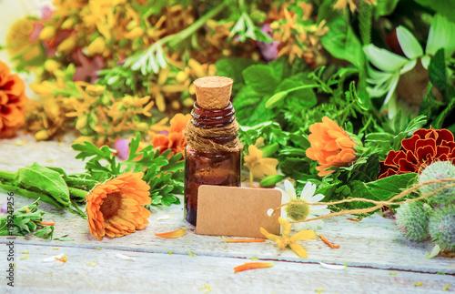 Fotografie, Obraz  Herbs. Medicinal plants. Selective focus.