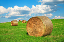 Bales Of Hay In Field Of Clover