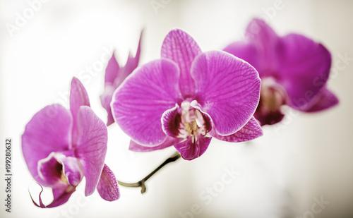 Papiers peints Orchidée Orchidées en macro