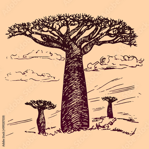 Photographie African landscape with baobabs, hand drawn doodle, sketch in pop art style, vect