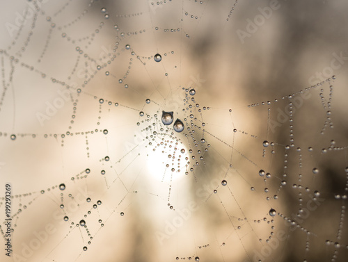 In de dag Paardebloemen en water The dewdrops on a spiderweb at morning