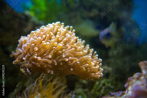 Plakat Piękny podwodny koralowy reaf ogród