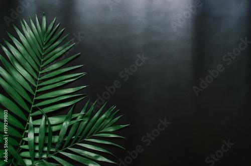 zielone-mieszkanie-swieckich-tropikalnych-lisci-palmowych-oddzialow-na-czarnym-tle-pokoj-dla-tekstu-kopia-napis