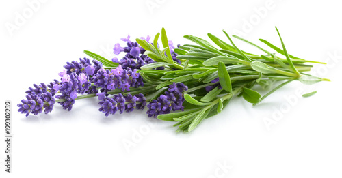 plakat Lavender flowers bunch