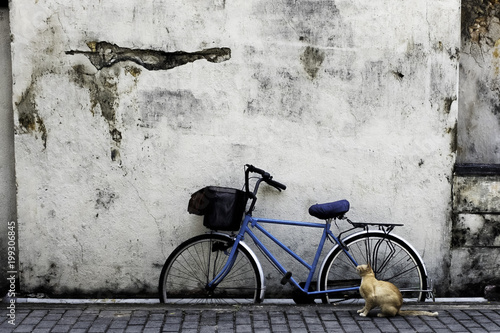Fotobehang Fiets The cat and the bike