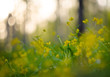Spring yellow flowers in the forest beautiful blurred background