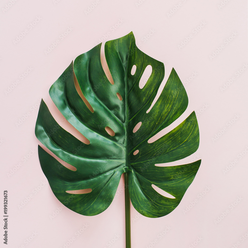 Fototapety, obrazy: Exotic tropical Monstera palm leaf on pink background. Flat lay, top view.