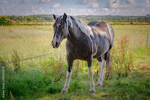 Photo Black horse in beautiful English Cotswolds Countryside