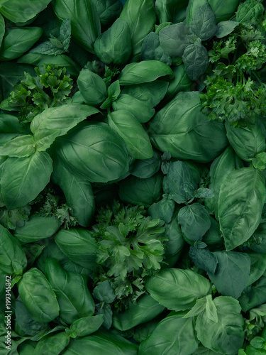 Mix of fresh green herbs (basil, mint and garden parsley) in great quantity Canvas Print