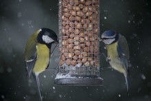 Close Up Of Birds Eating Food From Feeder During Snowfall