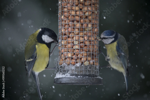 In de dag Vogel Close-up of birds eating food from feeder during snowfall