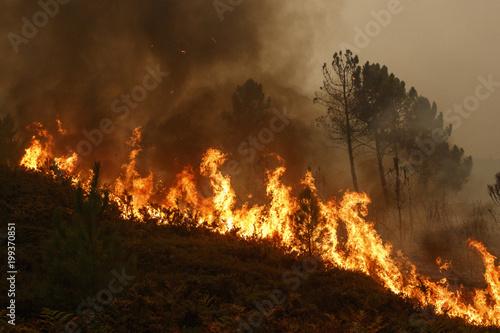 Slika na platnu Forest fire