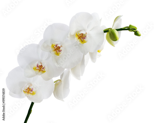 Stickers pour porte Orchidée Blooming twig of white orchid flower.