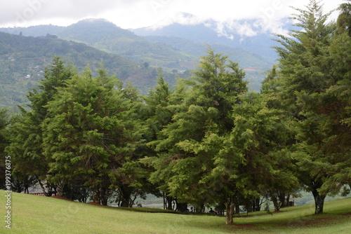 Foto auf Gartenposter Reflexion Grandes árboles en el bosque