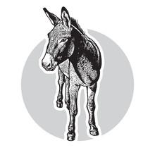 Donkey - Black And White Portr...