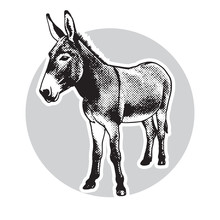 Donkey - Black And White Portr...