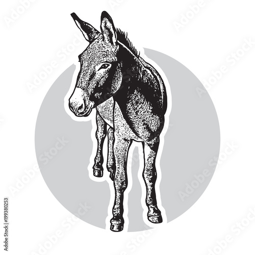 Fotomural Donkey - black and white portrait in front view