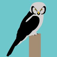 Hawk Owl Bird Face Vector Illustration Flat Style Profile