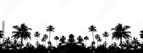 красивый черный силуэт на белом фоне тропических пальм