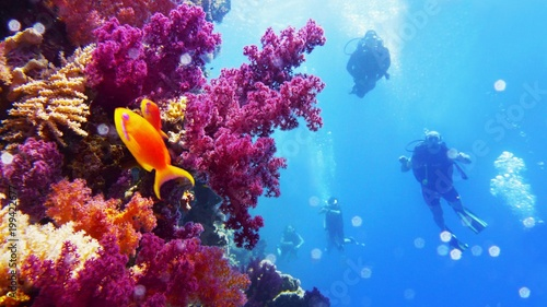 Beautiful colorful coral reef and divers on the background Canvas-taulu