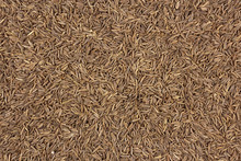 Cumin Seeds Texture, Full Frame Background
