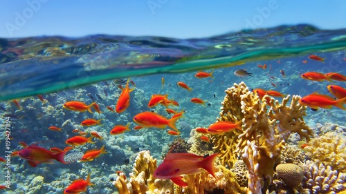 Spoed Foto op Canvas Koraalriffen Coral reef viewed from the sea surface