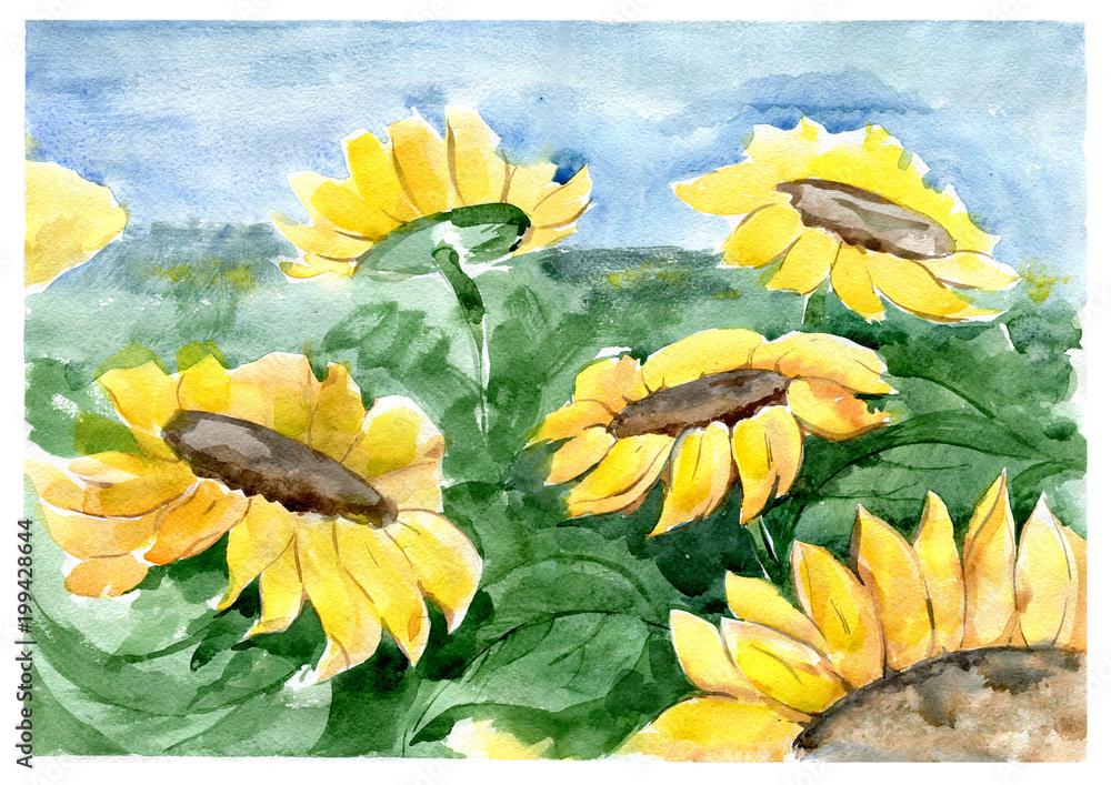 Słoneczniki na polu. Akwarela. <span>plik: #199428644 | autor: Julia Poleeva</span>