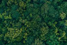 Atlantic Forest Brazil