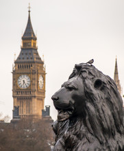 Trafalgar Square Lion Statue And Big Ben