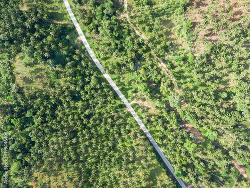 Poster Luchtfoto Aerial view of road through a palm tree forest
