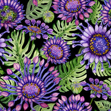 Beautiful Large Vivid Purple African Daisy Flowers With Green Monstera Leaves On Black Background. Seamless Floral Pattern. Watercolor Painting. Hand Painted Illustration.