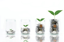 Saving Money Concept With Coins In Bottle Stack And Plant Growing Isolated On White Background
