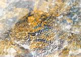 Fototapeta  - Abstrakcja rafa koralowa