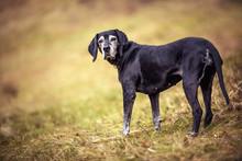 Senior Dog On The Spring Walk