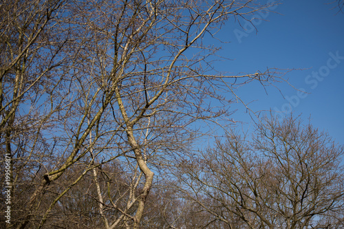 Fotobehang Bomen Tree Branches Winter Leafes Closeup Forest Nature