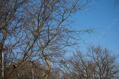In de dag Bomen Tree Branches Winter Leafes Closeup Forest Nature