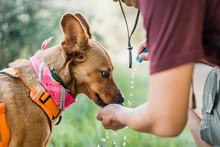 Hiking Dog Drinking Water