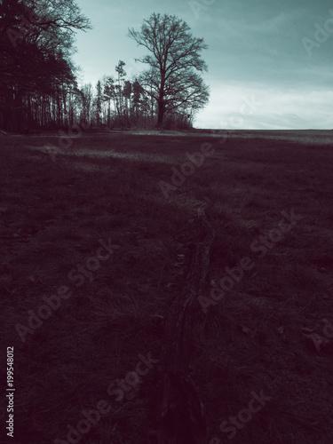 Fotobehang Aubergine Rural landscape view to an old oak