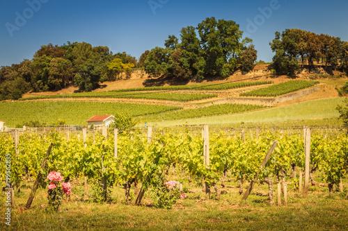 vineyard of Saint-Emilion, France, near Bordeaux at the end of spring 2017 Fototapeta