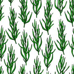 Fototapeta Rosemary vector drawing seamless pattern. Isolated plant with le