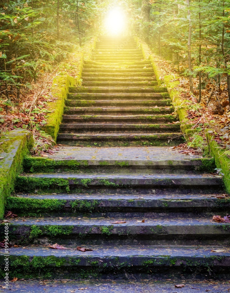 Fototapety, obrazy:  Steps leading up to the sun.  Way to God .  bright light from heaven .  Religious background  . Sunlight in the green forest .  Door to orange sunset . Light from sky .