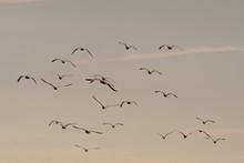 Seagulls Flying Among On The Sky
