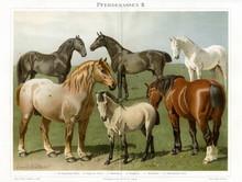 Horse Breeds II (from Meyers Lexikon, 1896, 13/772/773)